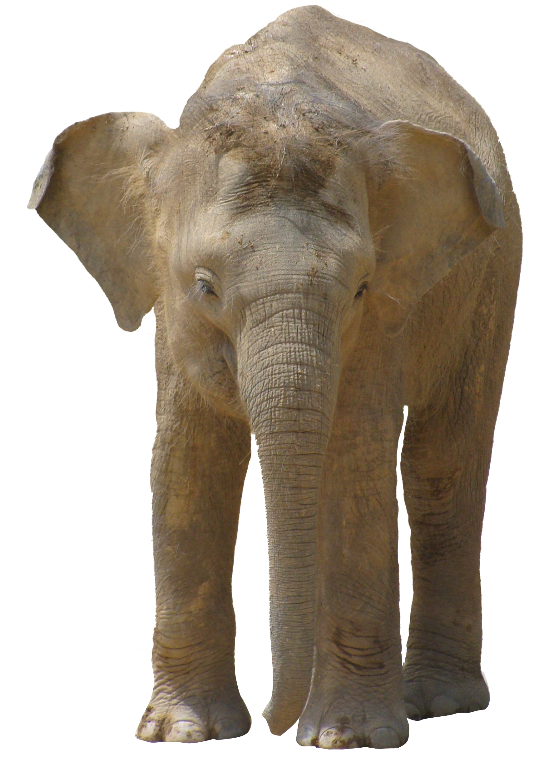 Elephant Png Image Pngpix Over 411 elephant png images are found on vippng. pngpix