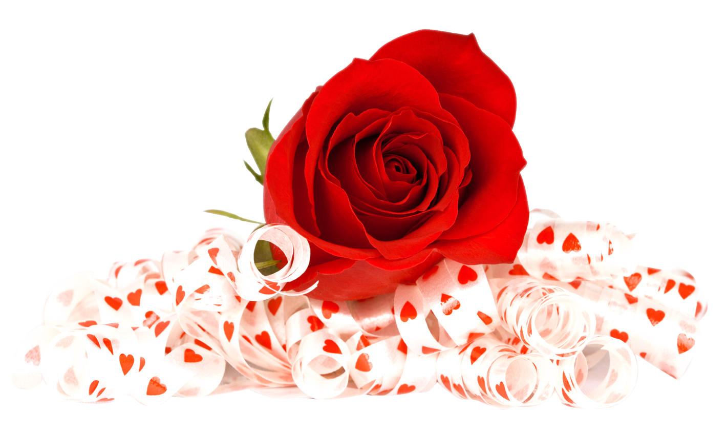 Red Rose PNG image - PngPix for Transparent Png Images Roses  103wja