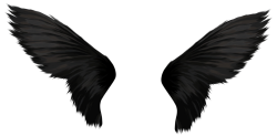 Black Wings PNG Transparent Image