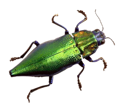 Bug PNG Transparent Image
