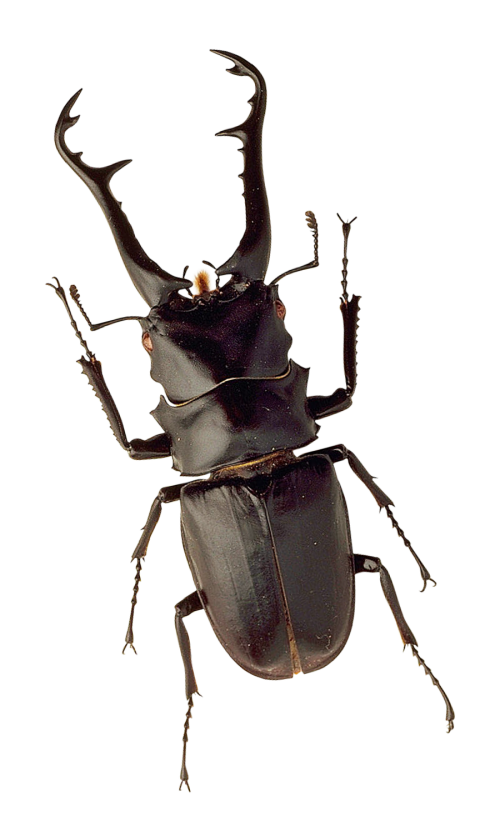 Insect PNG Transparent Image