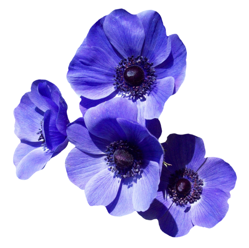 Purple Flower PNG Transparent Image