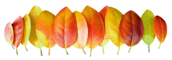 Autumn Leaves PNG Transparent Image