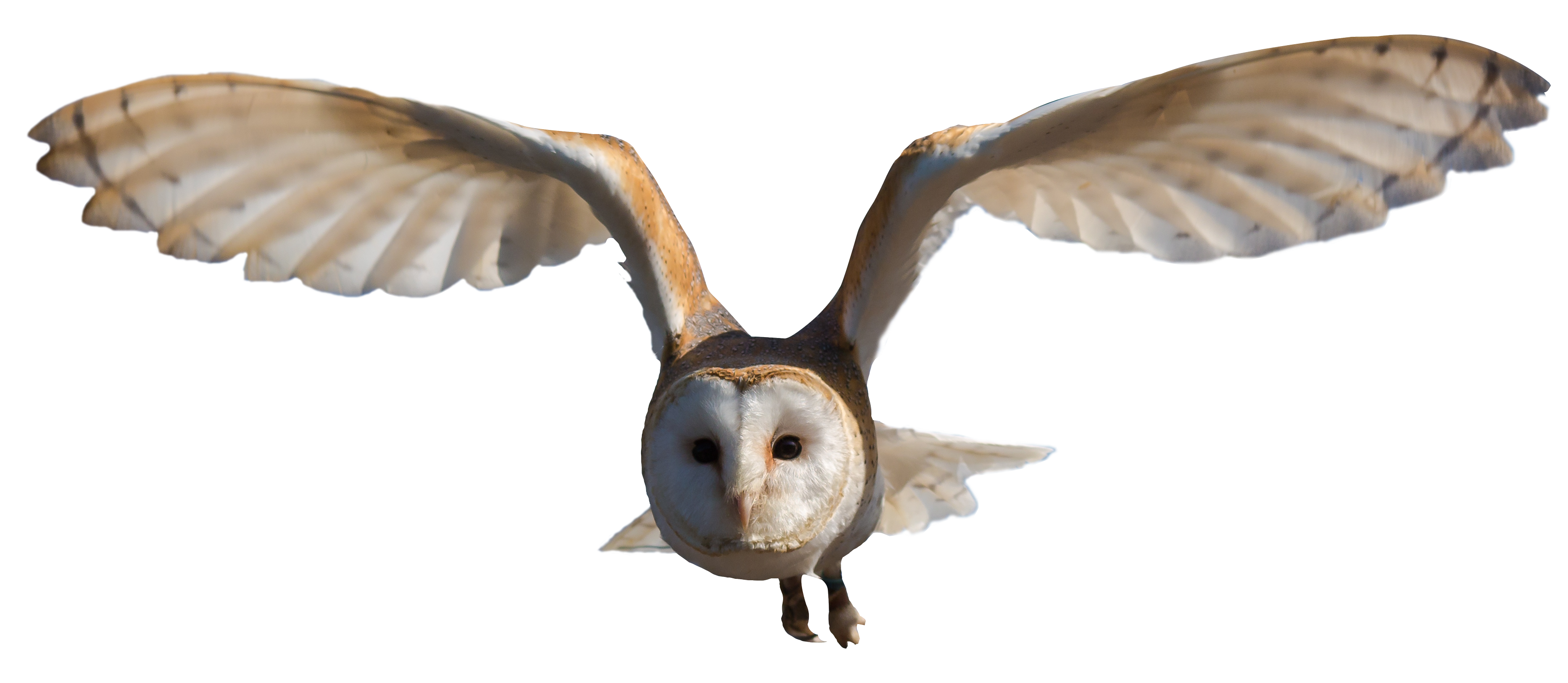 barn owl png transparent image pngpix hummingbird clipart black and white free hummingbird clip art images