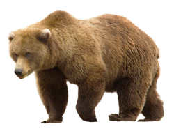 Bear PNG Transparent Image