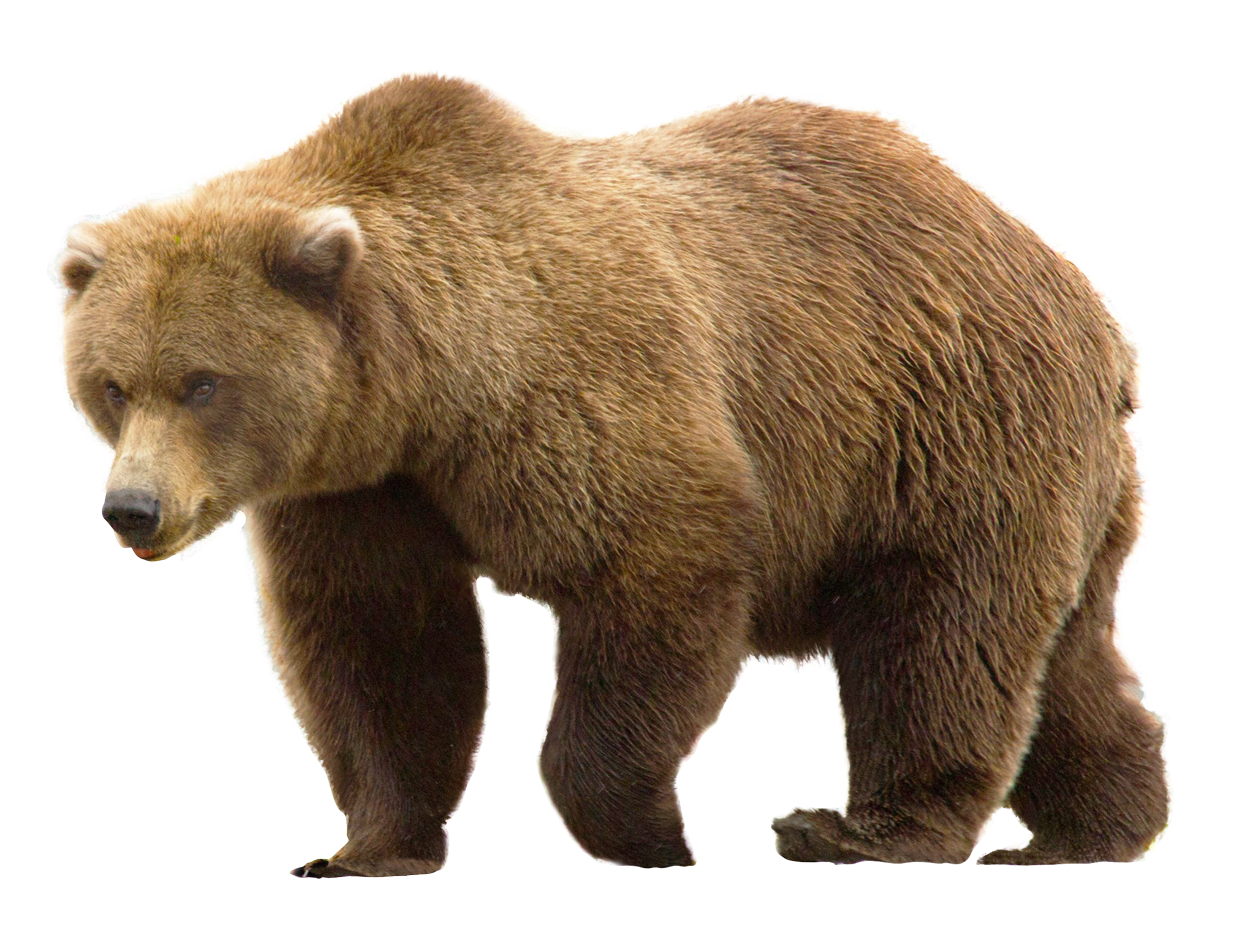 Http Www Pngpix Com Download Bear Png Transparent Image