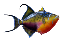 Colorful Fish PNG Transparent Image