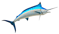 Fish PNG Transparent Image