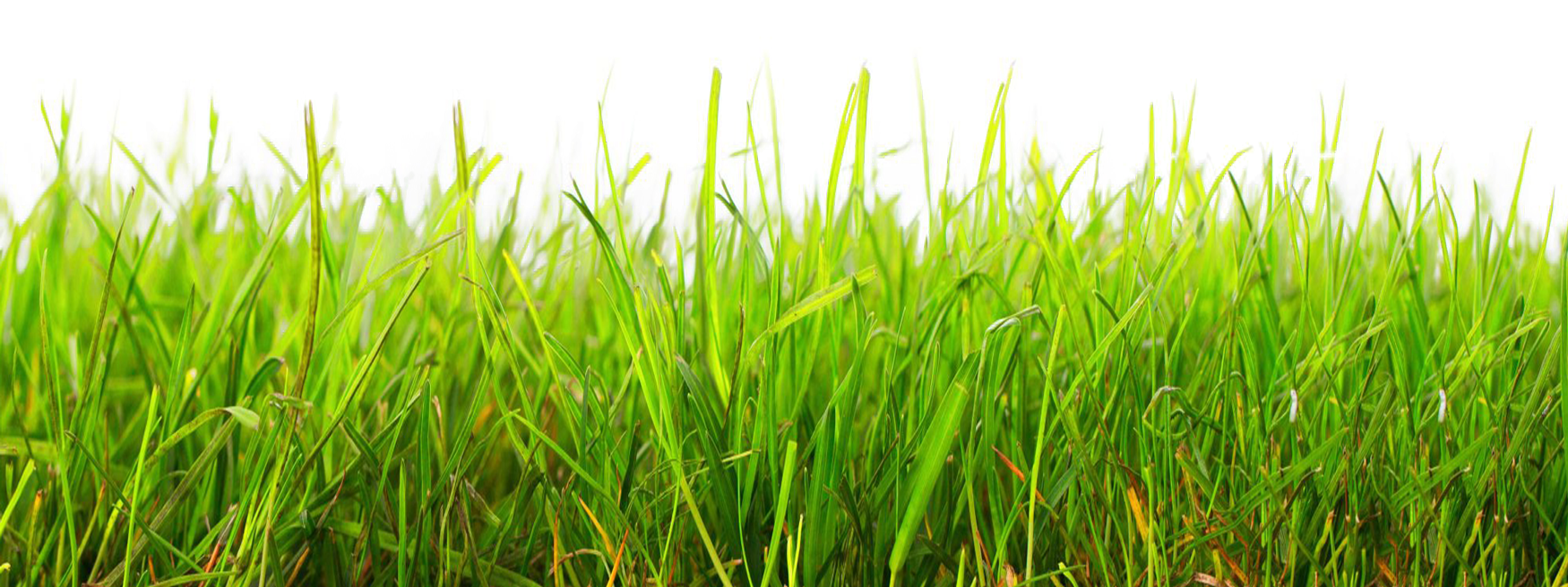Transparent Grass - Bing images