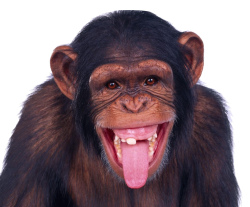 Monkey PNG Transparent Image