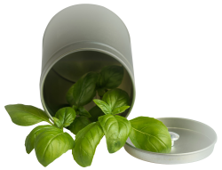 Basil Leaf Pot PNG Transparent Image